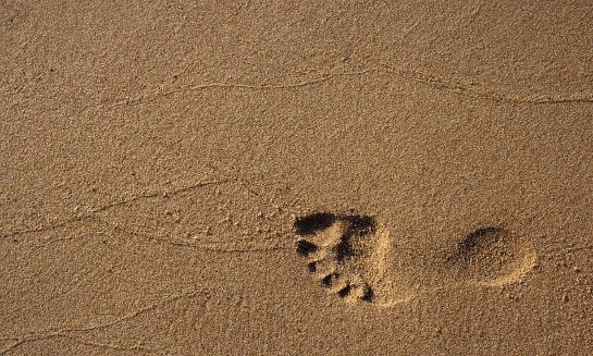 Footprints from the digital world make marketing more effective